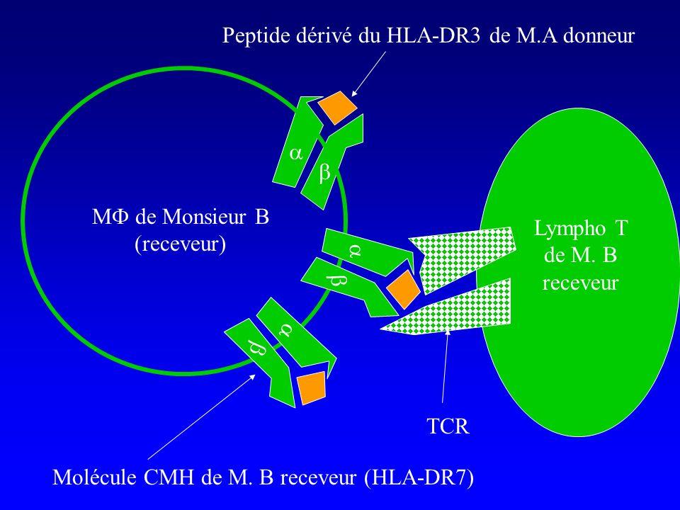 M de Monsieur B (receveur) Lympho T de M. B receveur TCR Peptide dérivé du HLA-DR3 de M.A donneur Molécule CMH de M. B receveur (HLA-DR7)