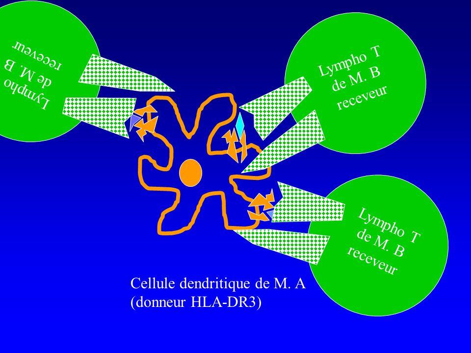 Cellule dendritique de M. A (donneur HLA-DR3) Lympho T de M. B receveur