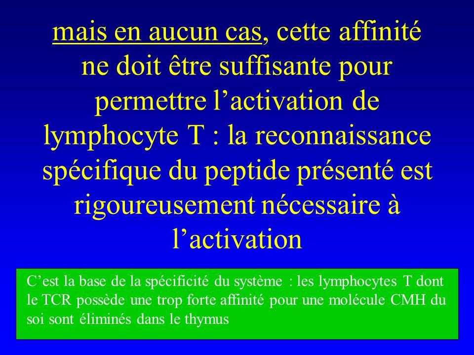 mais en aucun cas, cette affinité ne doit être suffisante pour permettre lactivation de lymphocyte T : la reconnaissance spécifique du peptide présent