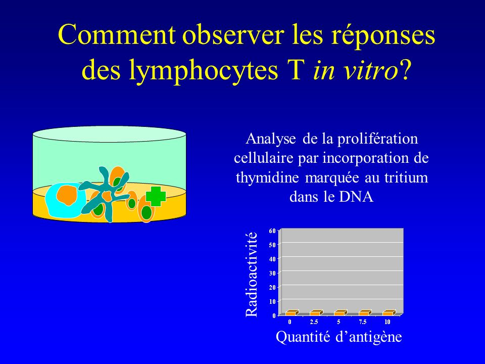 Comment observer les réponses des lymphocytes T in vitro? Analyse de la prolifération cellulaire par incorporation de thymidine marquée au tritium dan