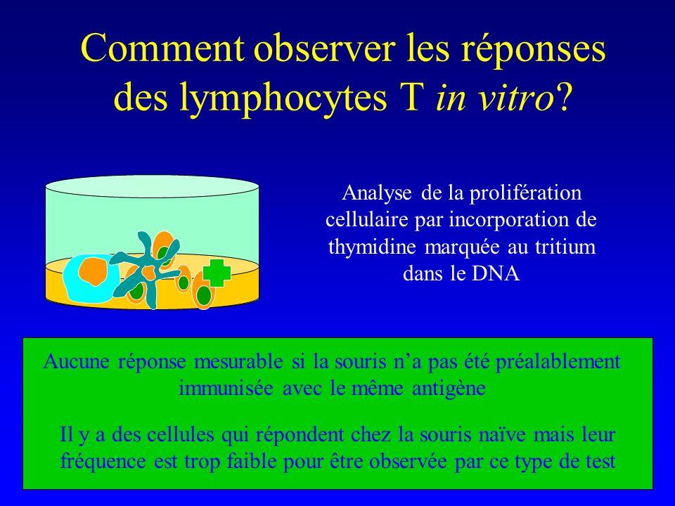 Chez un individu naïf (qui na jamais rencontré lantigène considéré) Fréquence des lymphocytes T capables dinteragir avec un déterminant antigénique allotypique dune molécule CMH donnée (p.ex.