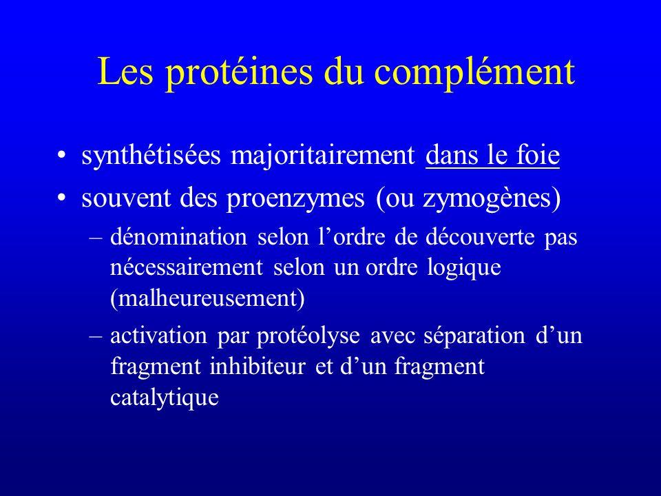 Les protéines du complément synthétisées majoritairement dans le foie souvent des proenzymes (ou zymogènes) –dénomination selon lordre de découverte p