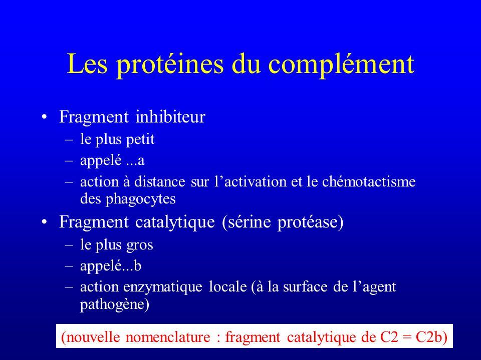 Les protéines du complément Fragment inhibiteur –le plus petit –appelé...a –action à distance sur lactivation et le chémotactisme des phagocytes Fragm