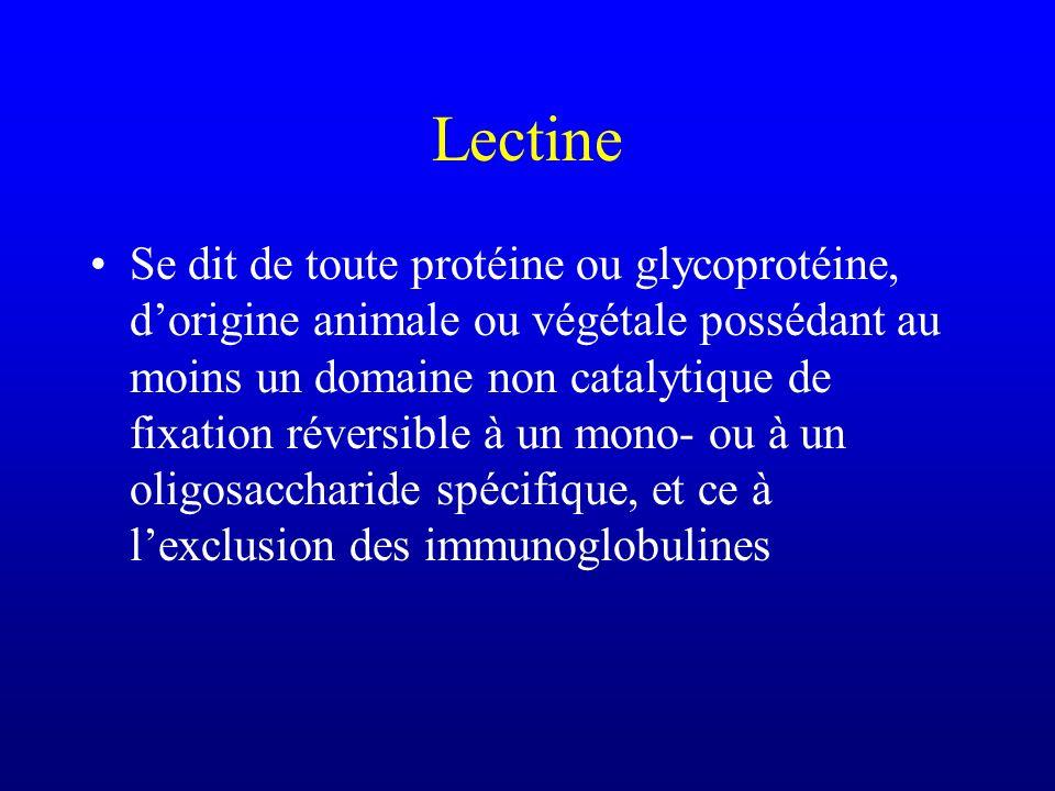 Lectine Se dit de toute protéine ou glycoprotéine, dorigine animale ou végétale possédant au moins un domaine non catalytique de fixation réversible à