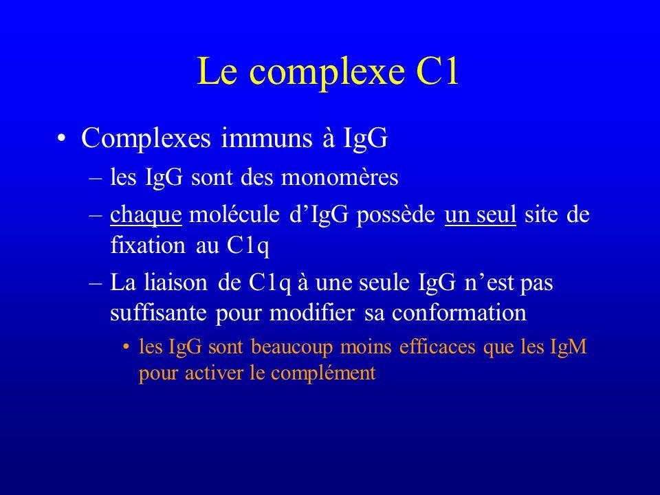 Le complexe C1 Complexes immuns à IgG –les IgG sont des monomères –chaque molécule dIgG possède un seul site de fixation au C1q –La liaison de C1q à u
