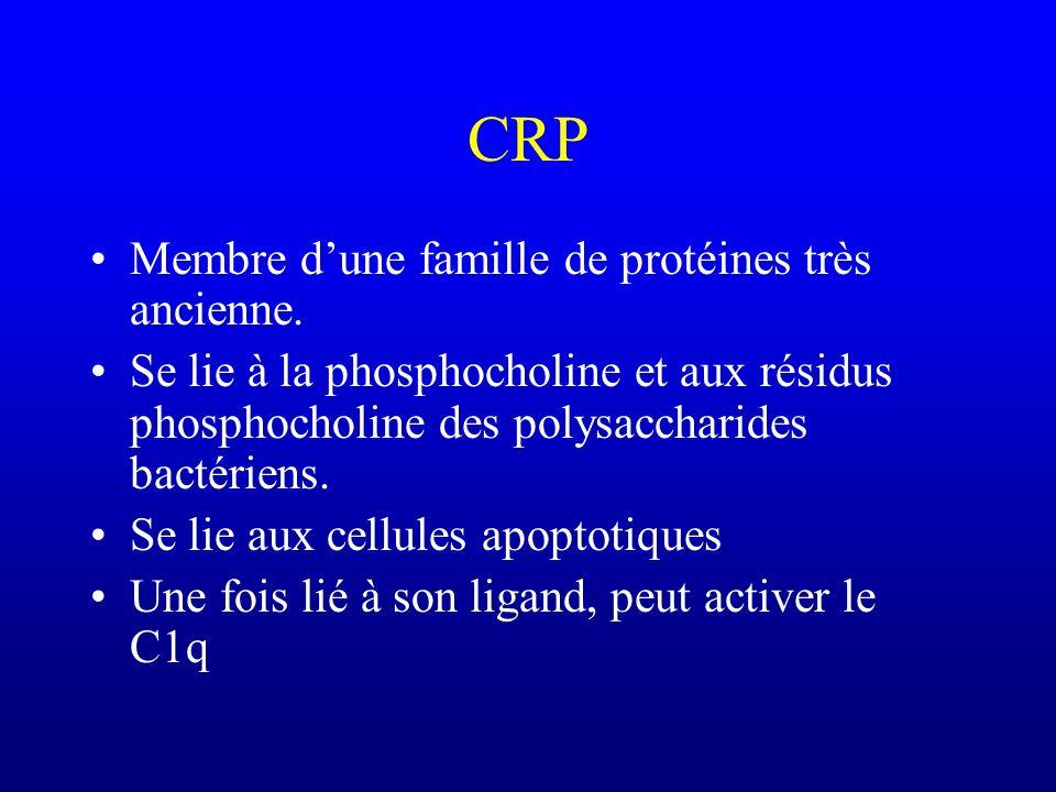 Membre dune famille de protéines très ancienne. Se lie à la phosphocholine et aux résidus phosphocholine des polysaccharides bactériens. Se lie aux ce