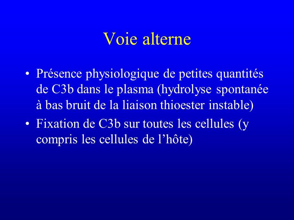 Voie alterne Présence physiologique de petites quantités de C3b dans le plasma (hydrolyse spontanée à bas bruit de la liaison thioester instable) Fixa