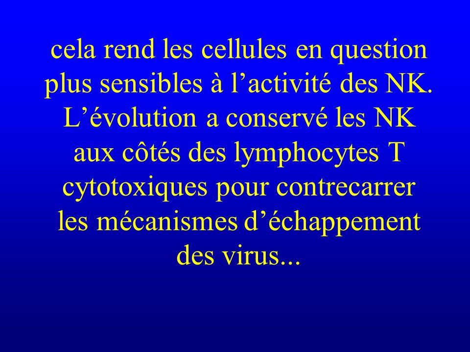 cela rend les cellules en question plus sensibles à lactivité des NK. Lévolution a conservé les NK aux côtés des lymphocytes T cytotoxiques pour contr