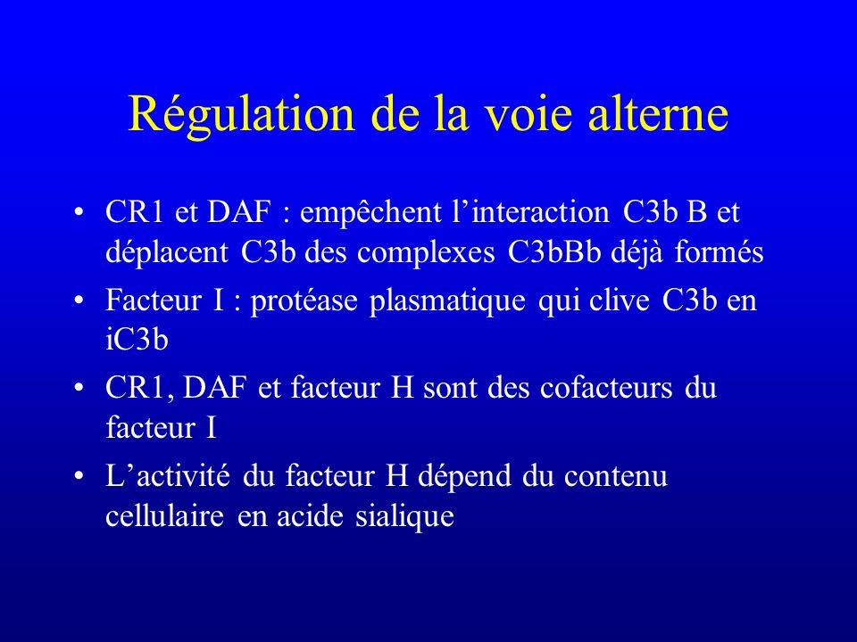 Régulation de la voie alterne CR1 et DAF : empêchent linteraction C3b B et déplacent C3b des complexes C3bBb déjà formés Facteur I : protéase plasmati