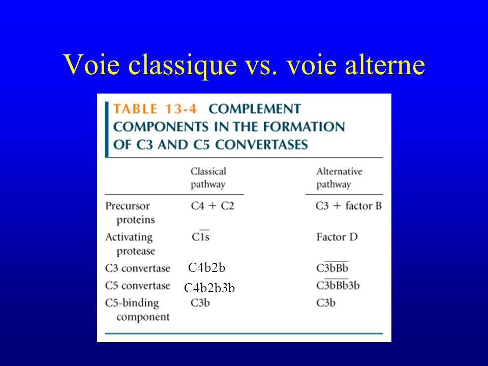 Voie classique vs. voie alterne C4b2b C4b2b3b