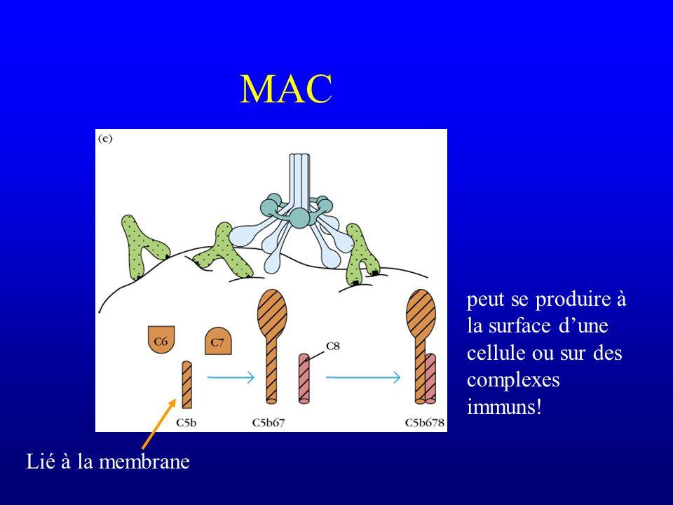 MAC Lié à la membrane peut se produire à la surface dune cellule ou sur des complexes immuns!