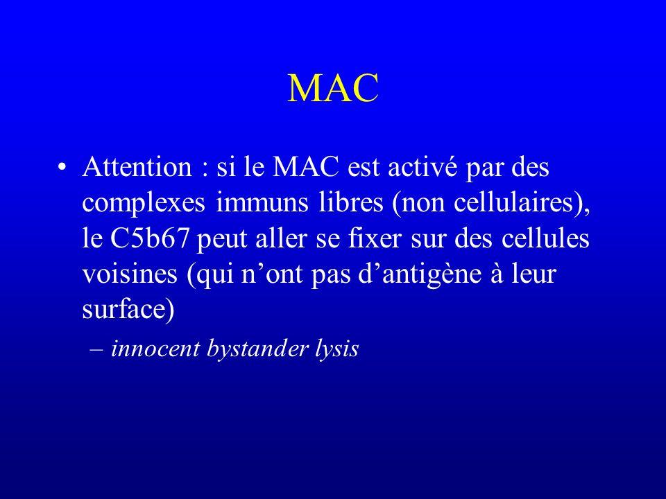MAC Attention : si le MAC est activé par des complexes immuns libres (non cellulaires), le C5b67 peut aller se fixer sur des cellules voisines (qui no