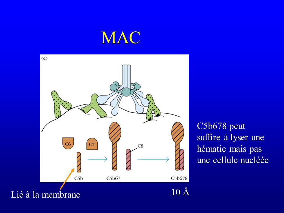 MAC Lié à la membrane C5b678 peut suffire à lyser une hématie mais pas une cellule nucléée 10 Å