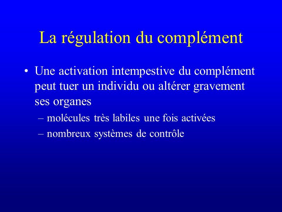 La régulation du complément Une activation intempestive du complément peut tuer un individu ou altérer gravement ses organes –molécules très labiles u