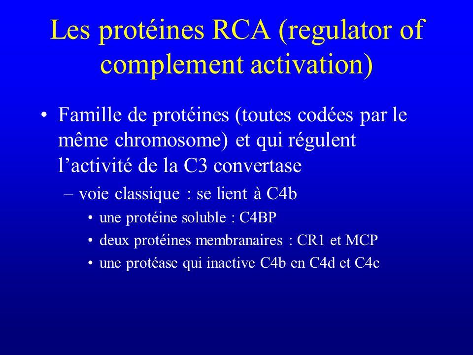 Les protéines RCA (regulator of complement activation) Famille de protéines (toutes codées par le même chromosome) et qui régulent lactivité de la C3
