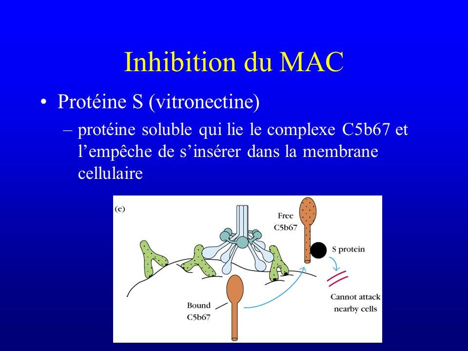 Inhibition du MAC Protéine S (vitronectine) –protéine soluble qui lie le complexe C5b67 et lempêche de sinsérer dans la membrane cellulaire