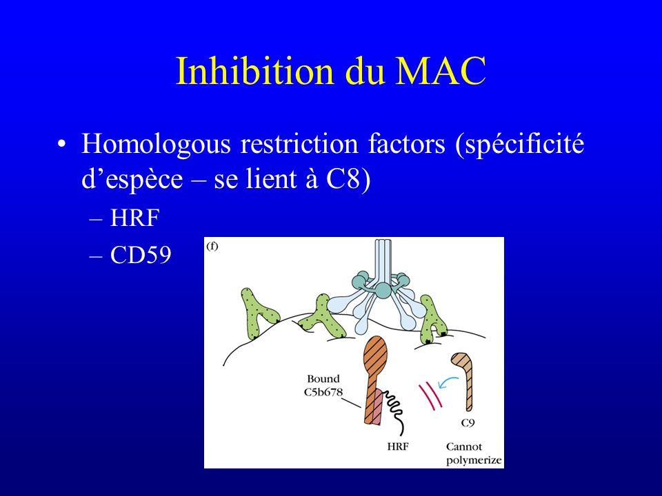 Inhibition du MAC Homologous restriction factors (spécificité despèce – se lient à C8) –HRF –CD59