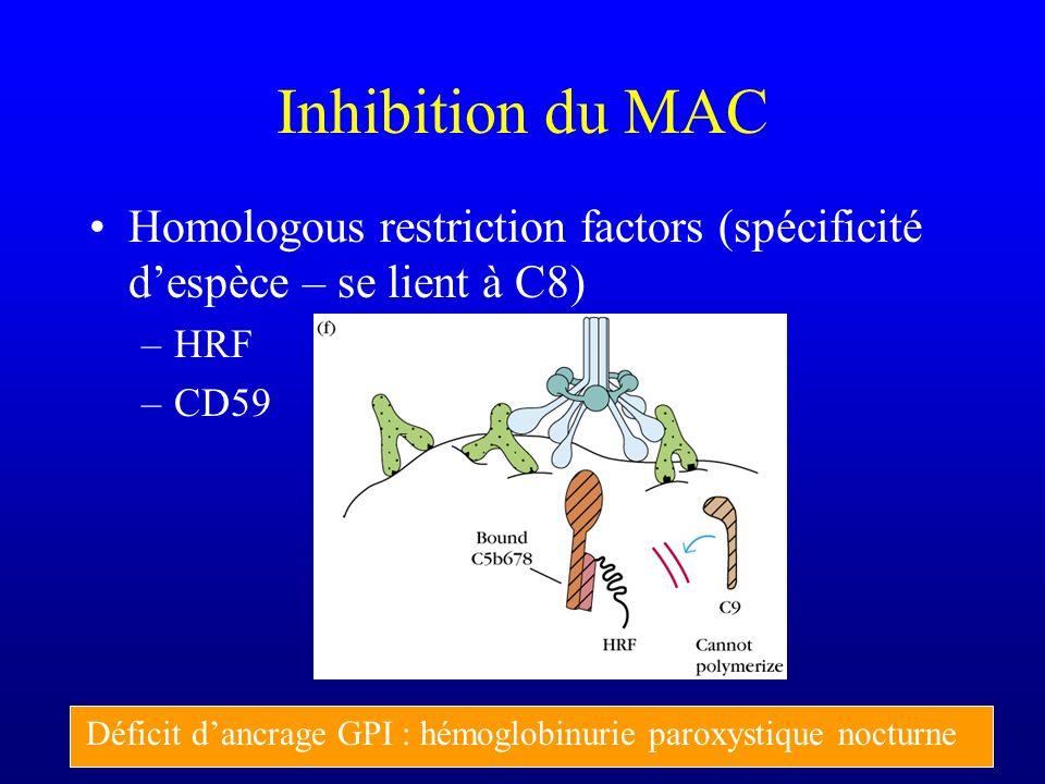 Inhibition du MAC Homologous restriction factors (spécificité despèce – se lient à C8) –HRF –CD59 Déficit dancrage GPI : hémoglobinurie paroxystique n