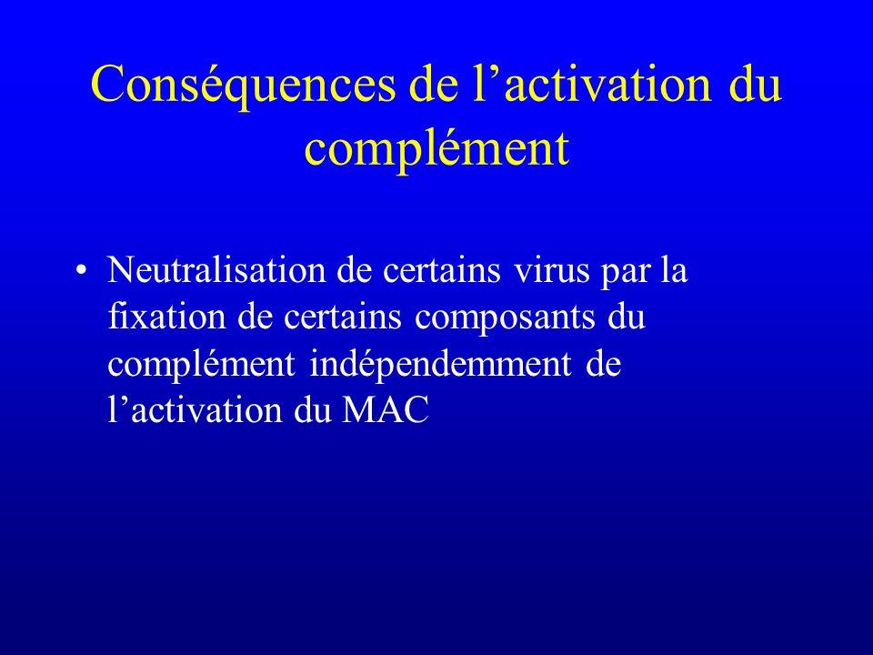 Conséquences de lactivation du complément Neutralisation de certains virus par la fixation de certains composants du complément indépendemment de lact