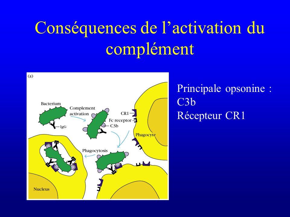 Conséquences de lactivation du complément Principale opsonine : C3b Récepteur CR1