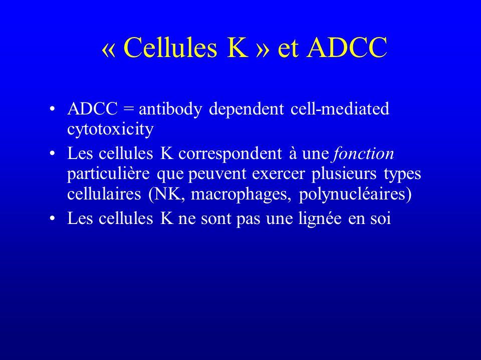 « Cellules K » et ADCC ADCC = antibody dependent cell-mediated cytotoxicity Les cellules K correspondent à une fonction particulière que peuvent exerc