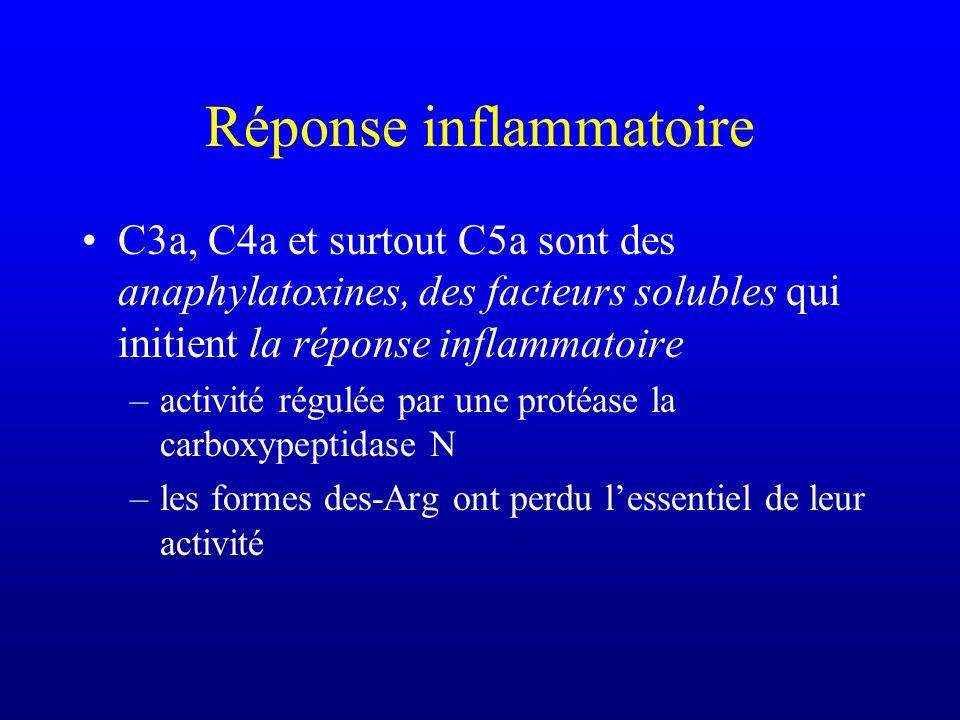 Réponse inflammatoire C3a, C4a et surtout C5a sont des anaphylatoxines, des facteurs solubles qui initient la réponse inflammatoire –activité régulée