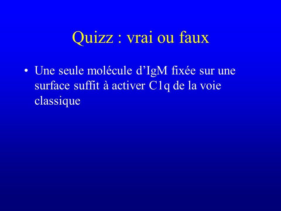 Quizz : vrai ou faux Une seule molécule dIgM fixée sur une surface suffit à activer C1q de la voie classique