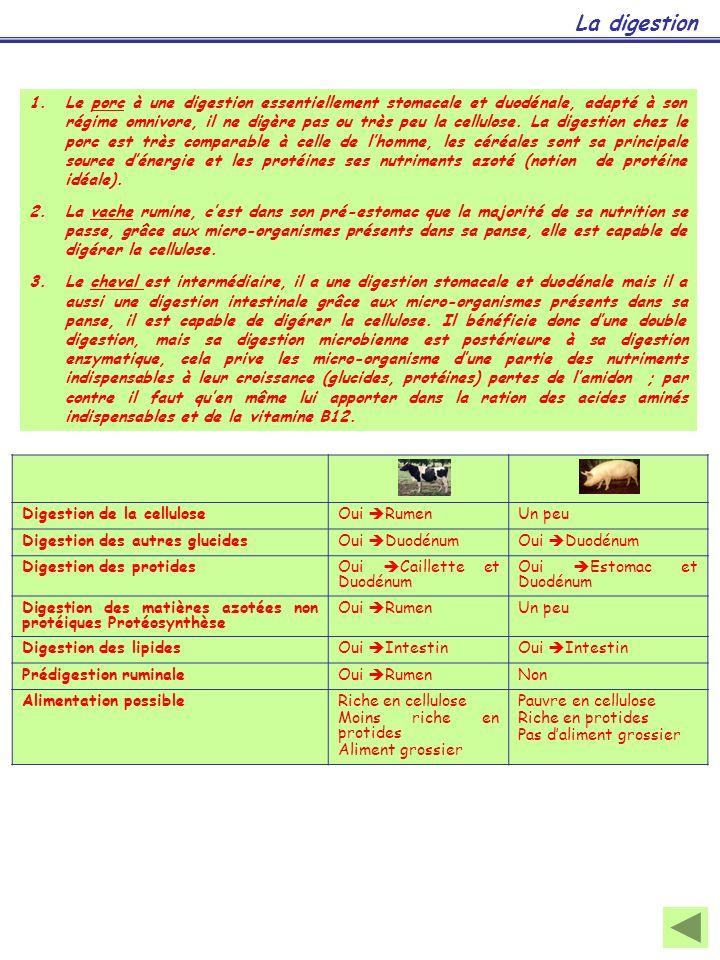 Eau78 à 92% dans les betteraves fourragères 78 à 88% dans lherbe verte 50 à 80% dans les ensilages et enrubannages 15 à 20% dans les foins et les grains H2OH2O Matières minérales Macro-éléments ou éléments majeurs Chlorures, phosphates, sulfates, carbonates de Ca, Na, Mg, K (cendres obtenues par combustion à 550°C) Micro-éléments ou oligo-éléments Fe, Cu, Zn, Co, Mn, I, Se...