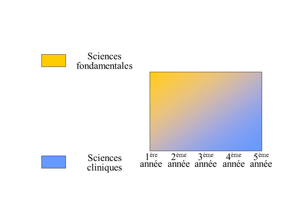 Sciences fondamentales Sciences cliniques 1 ère année 2 ème année 3 ème année 4 ème année 5 ème année