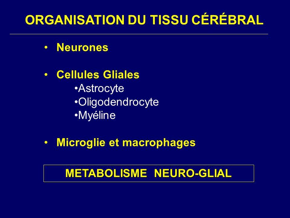 ORGANISATION DU TISSU CÉRÉBRAL Neurones Cellules Gliales Astrocyte Oligodendrocyte Myéline Microglie et macrophages METABOLISME NEURO-GLIAL METABOLISM