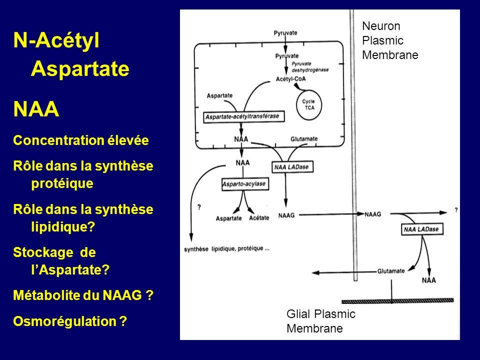 Neuron Plasmic Membrane Glial Plasmic Membrane N-Acétyl Aspartate NAA Concentration élevée Rôle dans la synthèse protéique Rôle dans la synthèse lipid