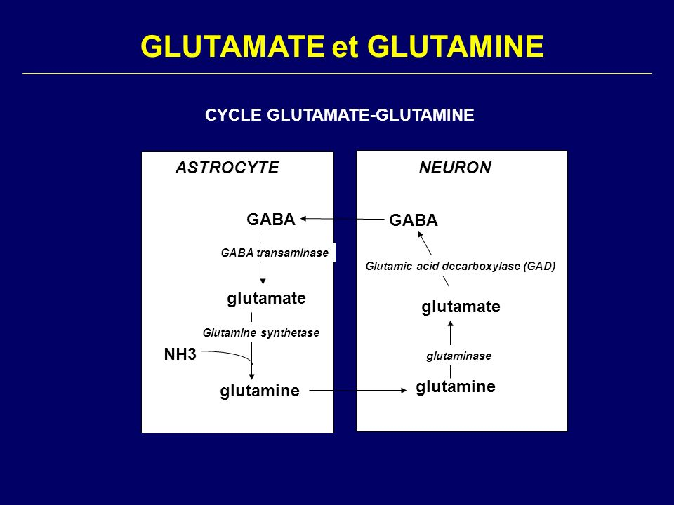 GLUTAMATE et GLUTAMINE NEURONASTROCYTE glutamine glutamate GABA glutamate glutamine NH3 glutaminase Glutamic acid decarboxylase (GAD) GABA transaminas