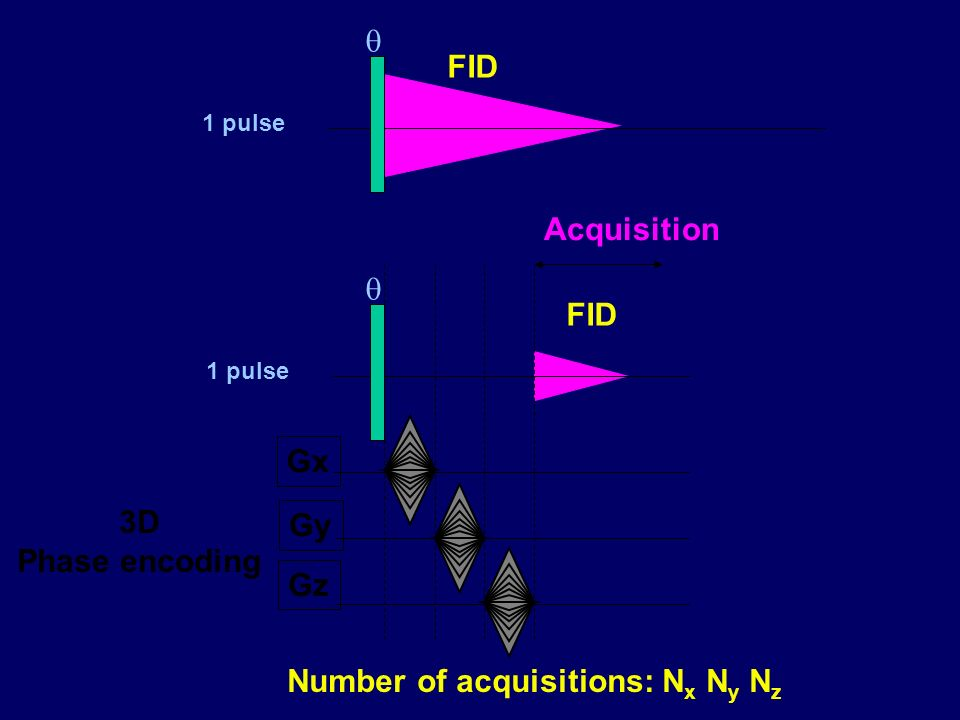 FID 1 pulse FID 1 pulse Gx Gy Gz Acquisition 3D Phase encoding Number of acquisitions: N x N y N z