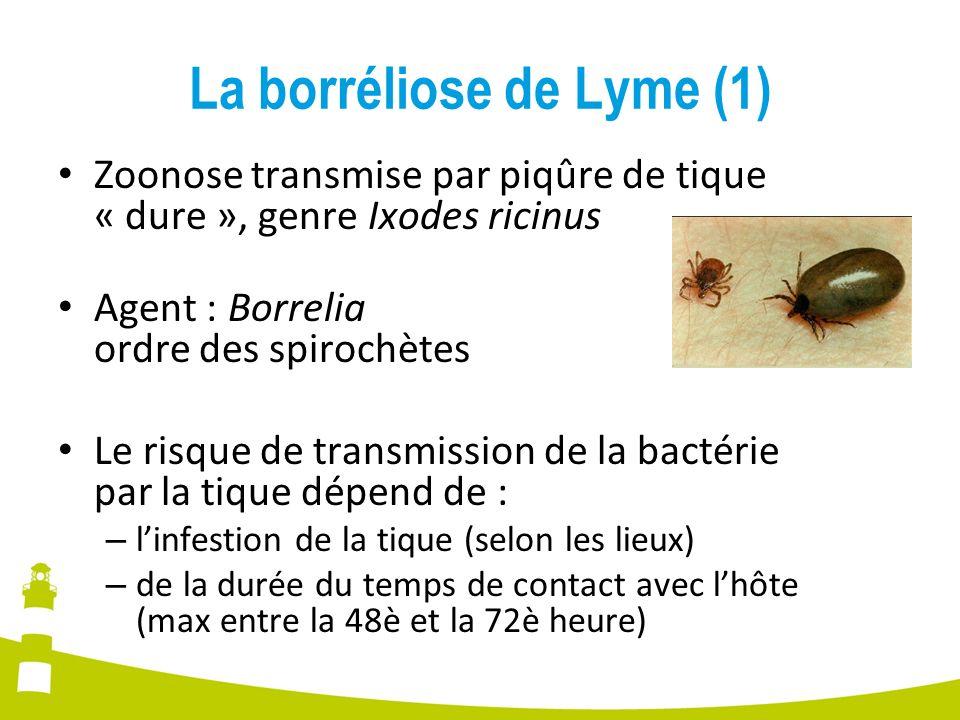 La borréliose de Lyme (1) Zoonose transmise par piqûre de tique « dure », genre Ixodes ricinus Agent : Borrelia ordre des spirochètes Le risque de tra