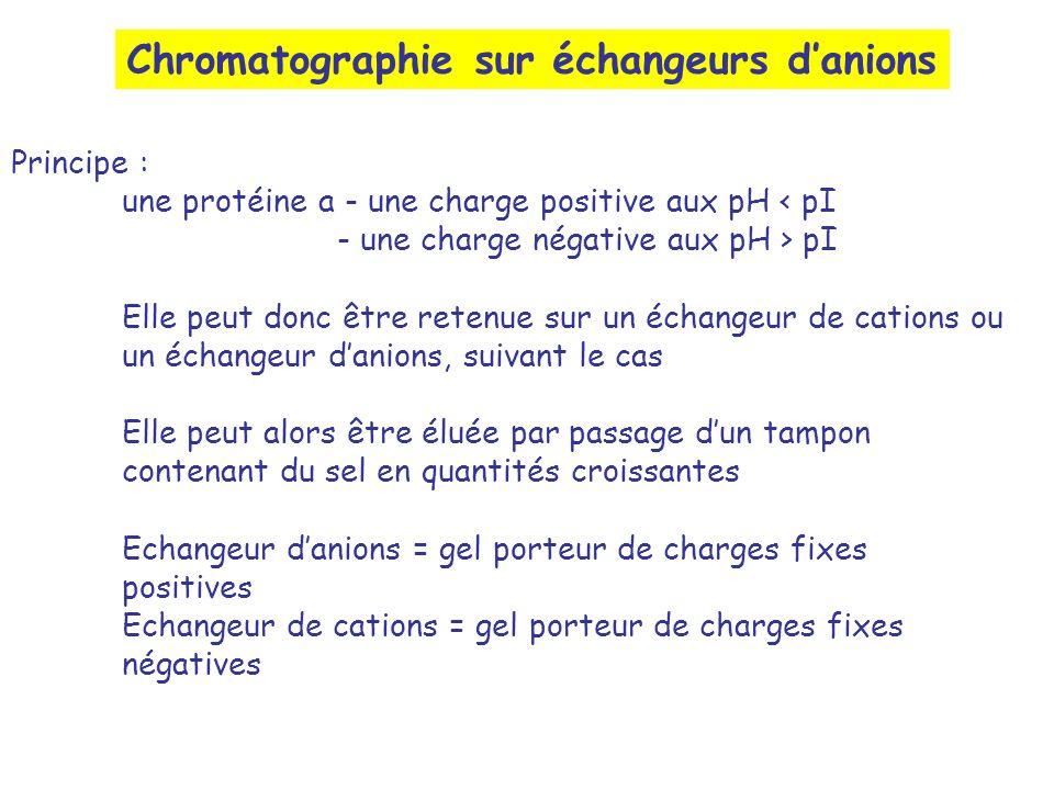 Chromatographie sur échangeurs danions Principe : une protéine a - une charge positive aux pH < pI - une charge négative aux pH > pI Elle peut donc êt