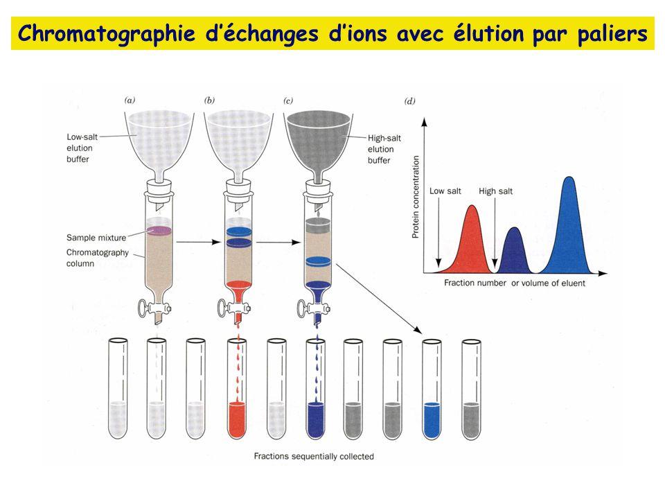 Chromatographie déchanges dions avec élution par paliers