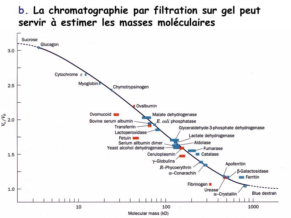 b. La chromatographie par filtration sur gel peut servir à estimer les masses moléculaires