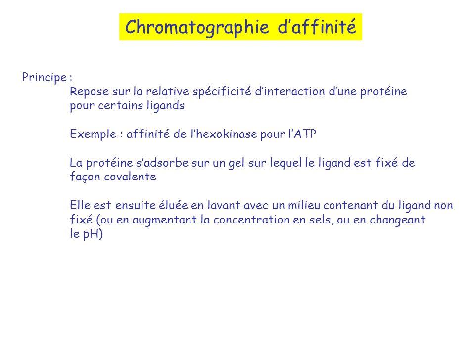 Chromatographie daffinité Principe : Repose sur la relative spécificité dinteraction dune protéine pour certains ligands Exemple : affinité de lhexoki