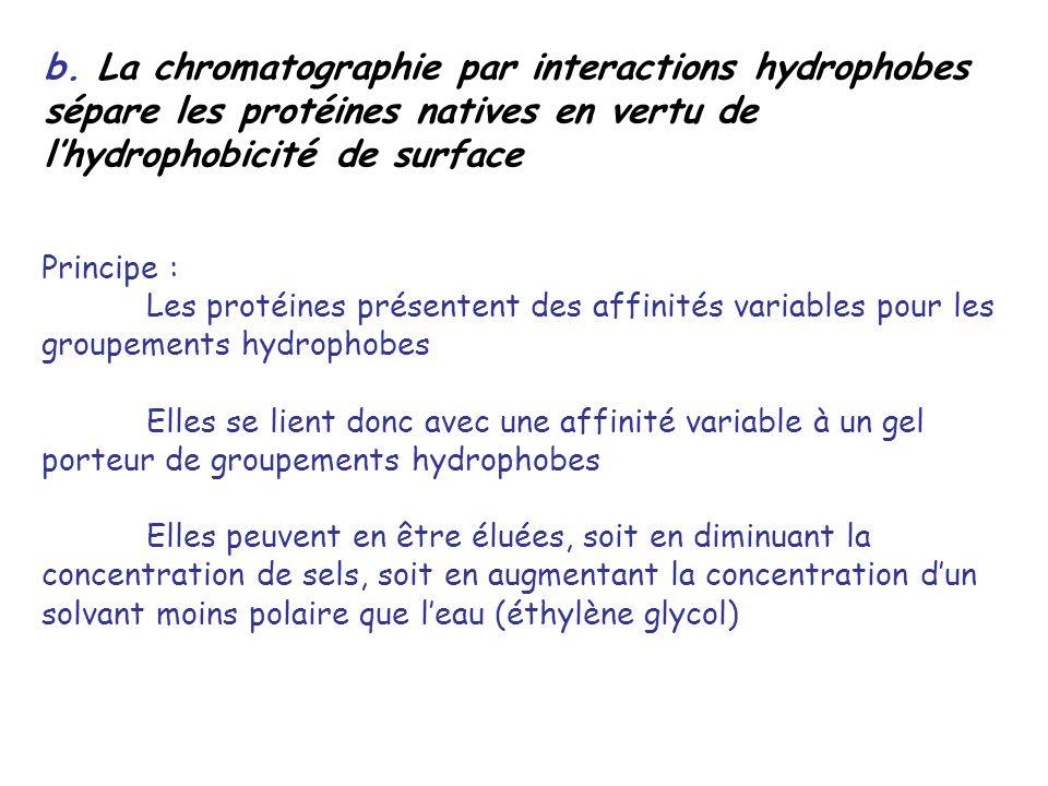 b. La chromatographie par interactions hydrophobes sépare les protéines natives en vertu de lhydrophobicité de surface Principe : Les protéines présen
