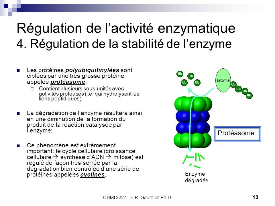 CHMI 2227 - E.R. Gauthier, Ph.D.13 Régulation de lactivité enzymatique 4. Régulation de la stabilité de lenzyme Les protéines polyubiquitinylées sont