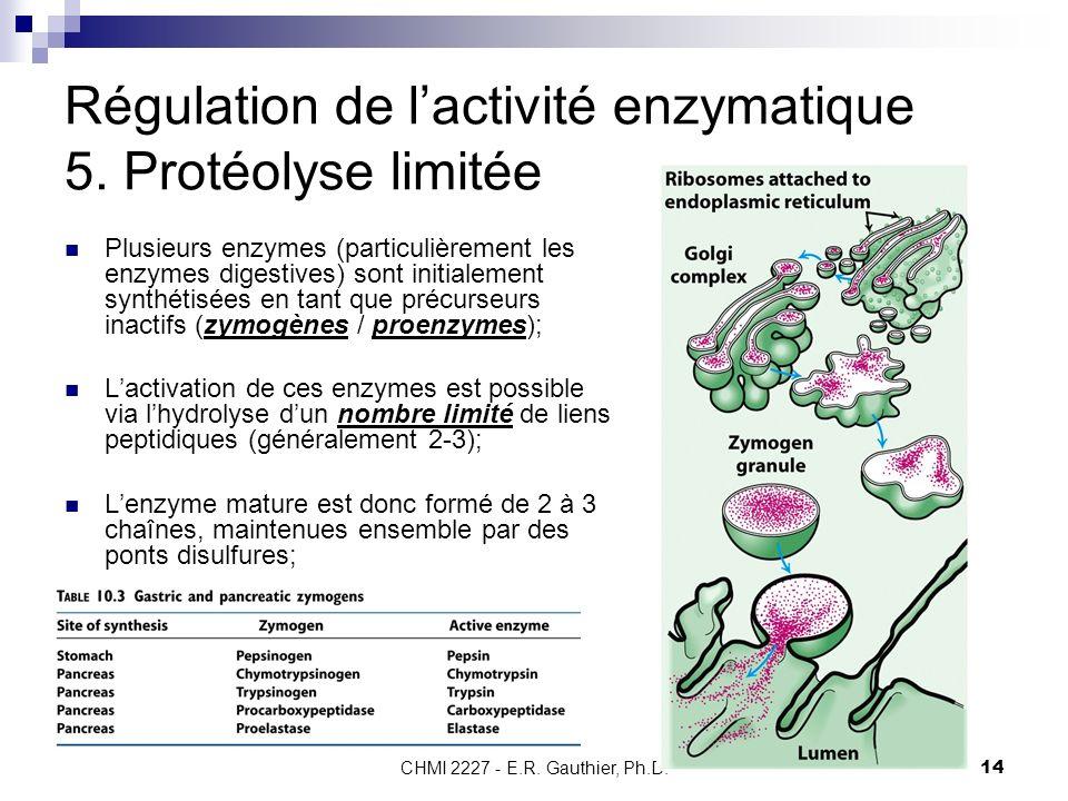 CHMI 2227 - E.R. Gauthier, Ph.D.14 Régulation de lactivité enzymatique 5. Protéolyse limitée Plusieurs enzymes (particulièrement les enzymes digestive