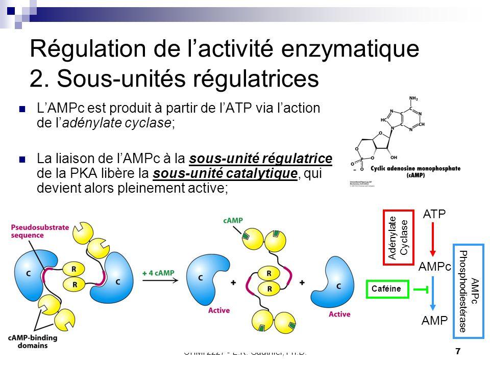 CHMI 2227 - E.R. Gauthier, Ph.D.7 Régulation de lactivité enzymatique 2. Sous-unités régulatrices LAMPc est produit à partir de lATP via laction de la