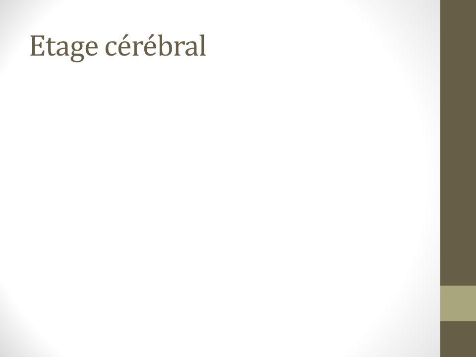 Etage cérébral
