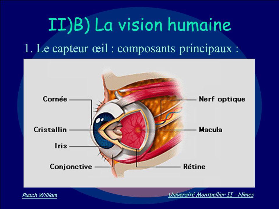 Vision par Ordinateur Puech William Université Montpellier II - Nîmes II)B) La vision humaine 1. Le capteur œil : composants principaux :