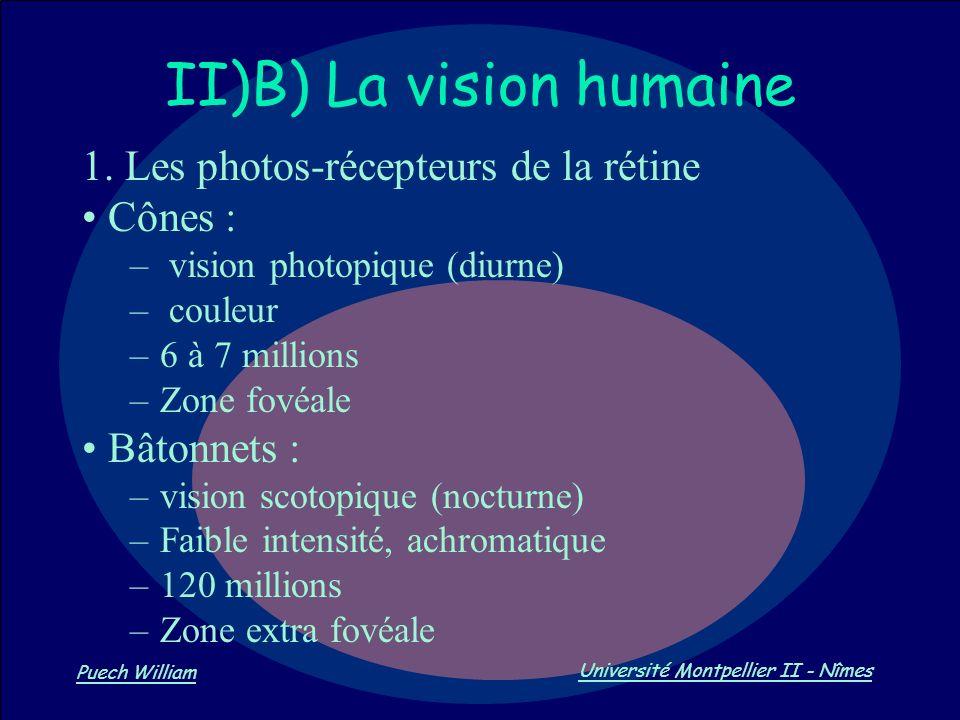 Vision par Ordinateur Puech William Université Montpellier II - Nîmes II)B) La vision humaine 1. Les photos-récepteurs de la rétine Cônes : – vision p