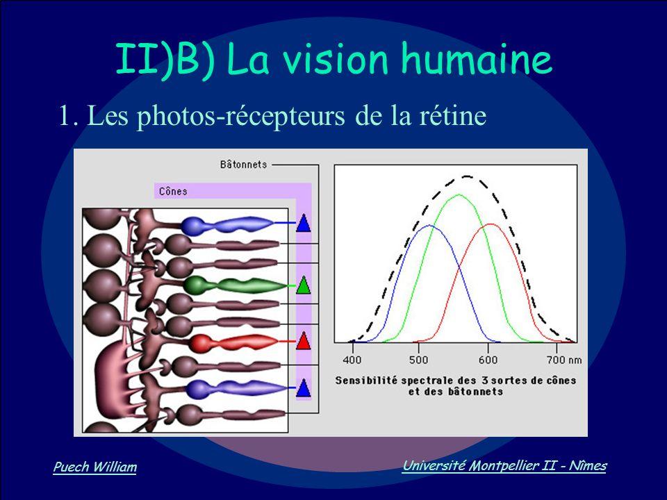 Vision par Ordinateur Puech William Université Montpellier II - Nîmes II)B) La vision humaine 1. Les photos-récepteurs de la rétine