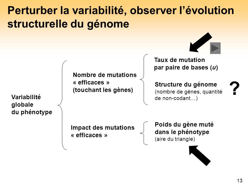 13 Perturber la variabilité, observer lévolution structurelle du génome Taux de mutation par paire de bases (u) Structure du génome (nombre de gènes,