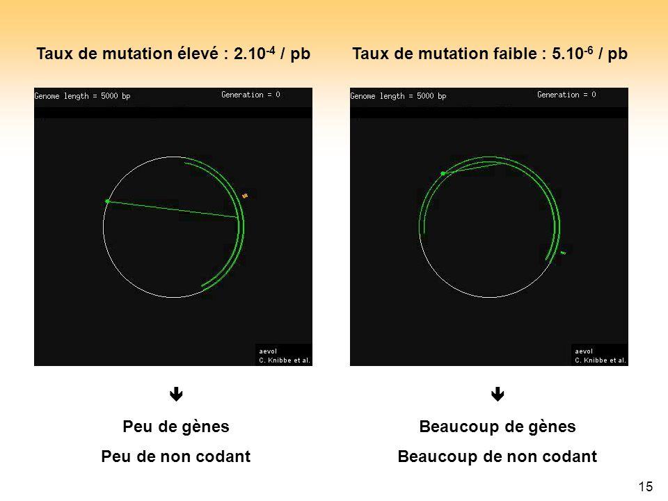 15 Taux de mutation élevé : 2.10 -4 / pbTaux de mutation faible : 5.10 -6 / pb Peu de gènes Peu de non codant Beaucoup de gènes Beaucoup de non codant