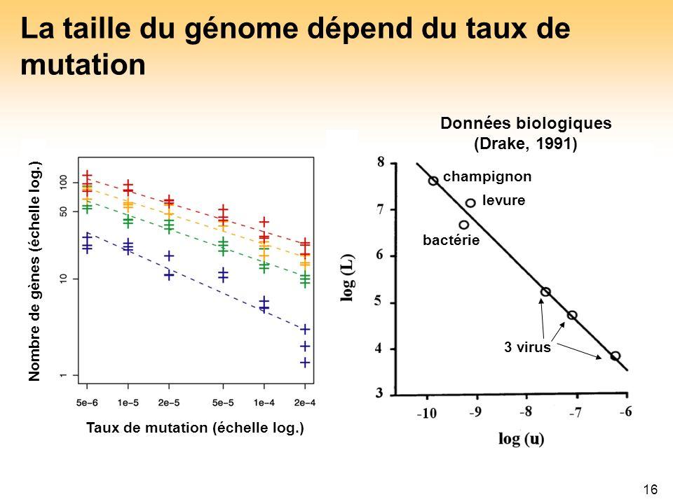 16 Taux de mutation (échelle log.) Nombre de gènes (échelle log.) Taux de mutation (échelle log.) Quantité de non codant (échelle log.) La taille du g