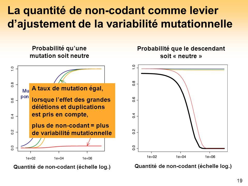 19 La quantité de non-codant comme levier dajustement de la variabilité mutationnelle Probabilité que le descendant soit « neutre » Probabilité quune